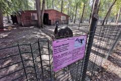 zoo-timisoara