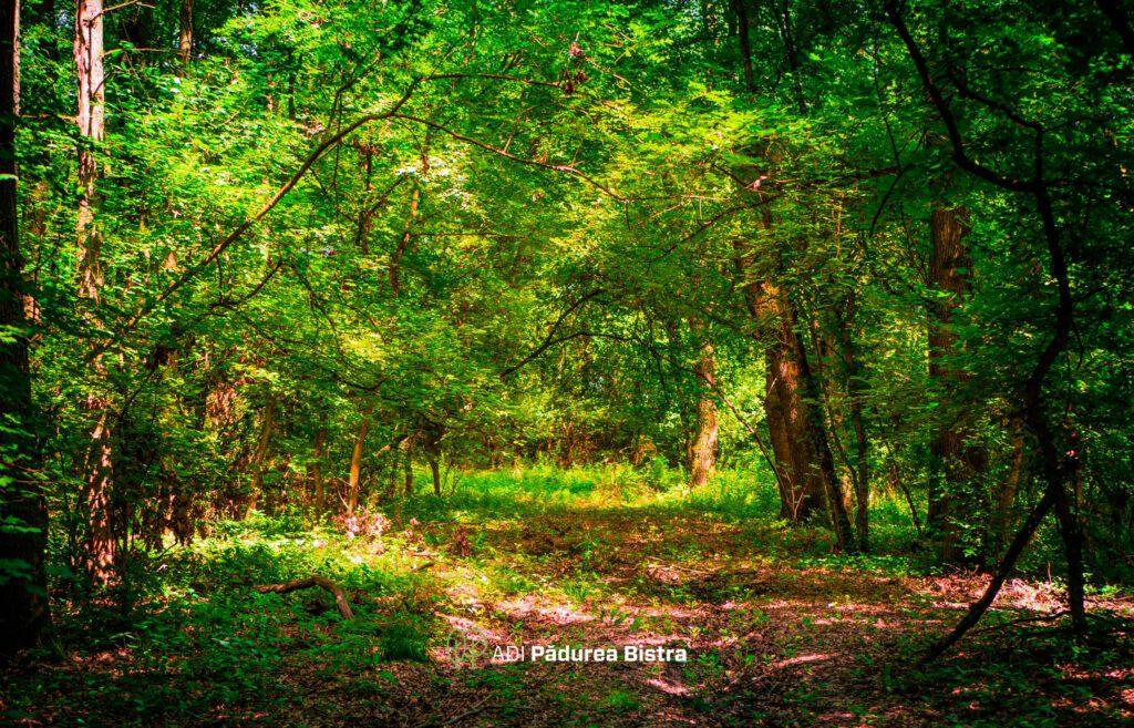 pădurea Bistra